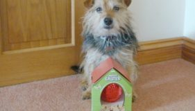 Warning – Remember this Easter that Dogs & Chocolate Don't Mix!  by Lily