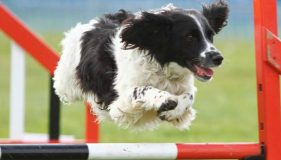 Happy Dogs Agility UK 2014 Finals