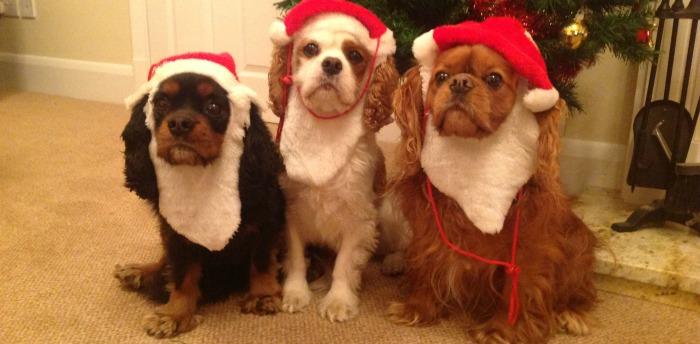 lov-christmas