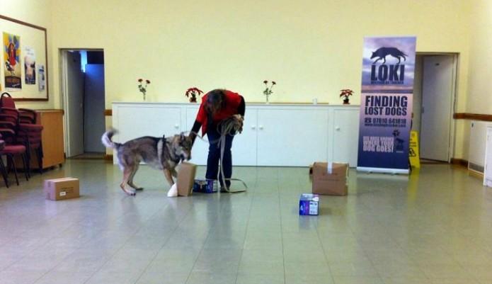 K9 wolf tracker