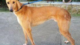 Norfolk Greyhound Rescue