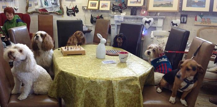 Best Dog Friendly Pubs Kent