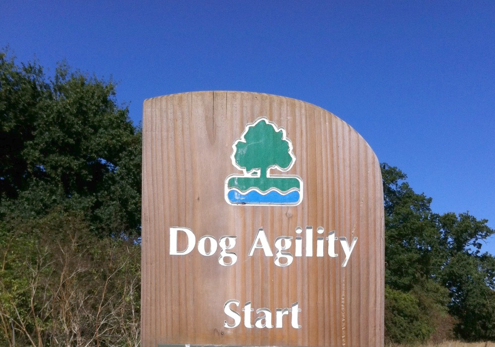 Dog Agility Start