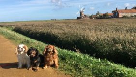 A pawesome day out at Blakeney and Cley