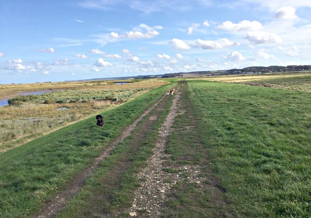 cley-marsh
