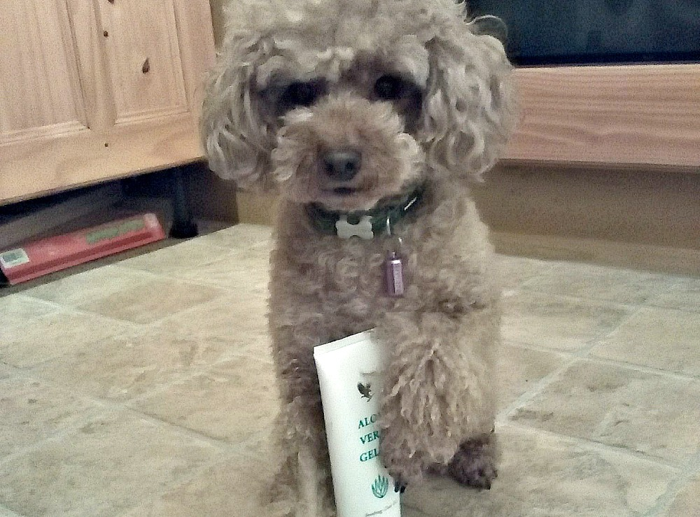 Is Aloe Vera Good For Dogs Skin