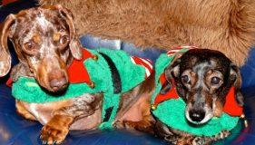 Christmas Pudding Party HQ News