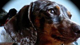 Goodbye Josef, An Extraordinary Dog.
