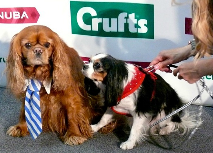 lucy-and-frodo-at-crufts