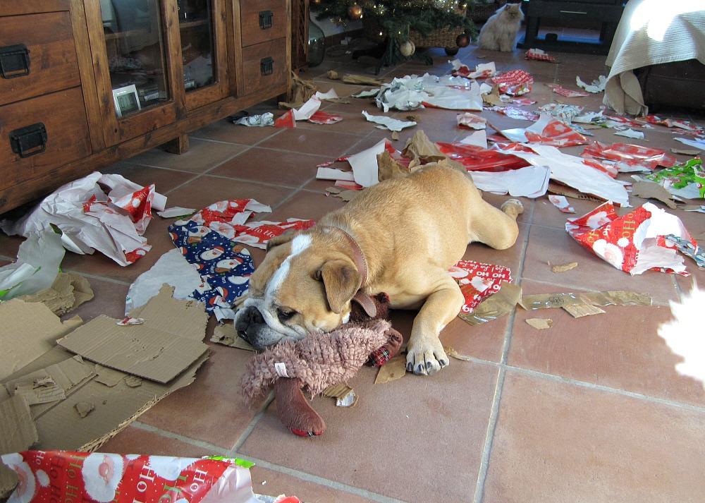 spike-at-christmas