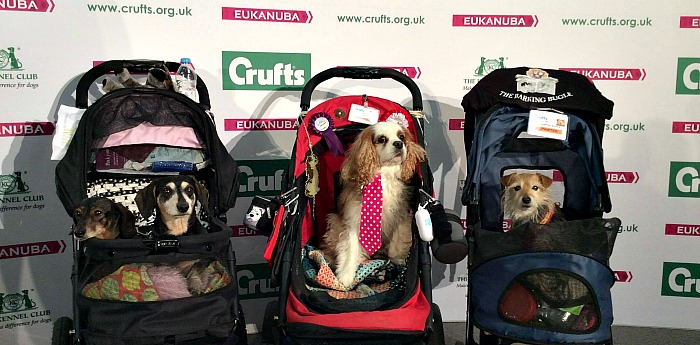Woofing from Crufts 2017