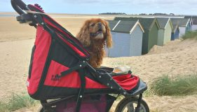 Why you need a pet stroller!
