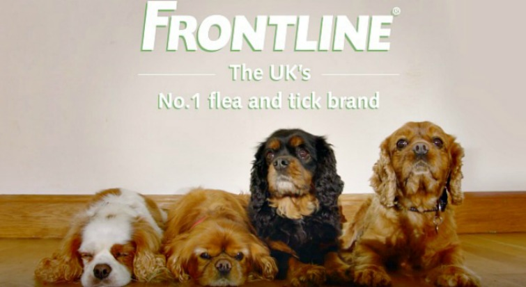 Frontline – Tried and Tested