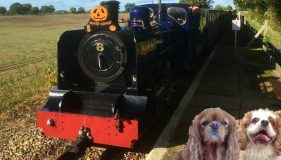 A pawfect weekend in Aylsham