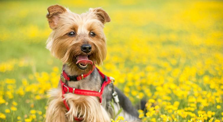 Dog laws around the world